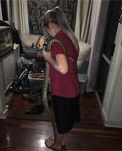Carpet snake and enclosure Maryborough Fraser Coast Preview