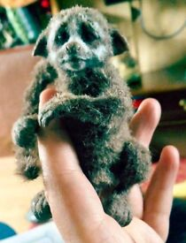 Baby Lemur Amazon Finger Monkey Doll