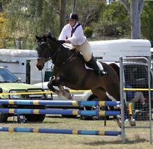 URGENT SALE - Due to Owner/Rider Serious Injury Toowoomba 4350 Toowoomba City Preview