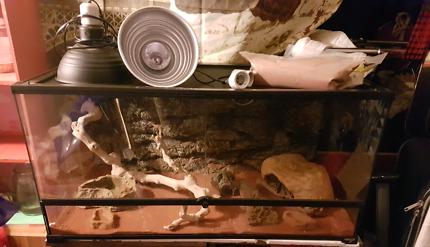 Reptile .enclosure 45x45x90