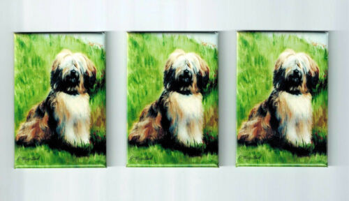 New Tibetan Terrier Magnet Set 3 Magnets By Ruth Maystead MFR # TET-1