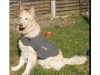 Anxiety Thundershirt for dog - and Car harness - medium