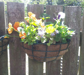 Wall/Fence hanging baskets. £5 each ono. Collection only from Firth Park.