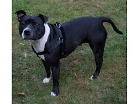 I Need Re-homing URGENTLY £200 Or Resasonable Offer