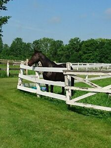 Horse Boarding - Elginburg area