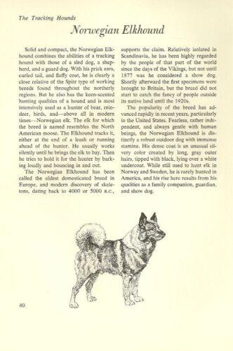 "The Norwegian Elkhound - Vintage Dog Art Print - Matted ""G"""