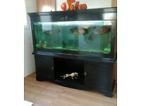 Wanted 5ft 6ft fish tank