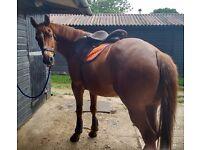 Horse Share, Thursley in Surrey