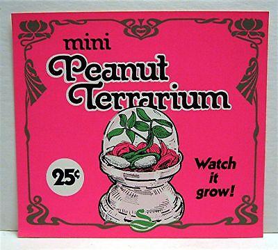Mini Peanut Terrarium Gumball Vending Machine Toy Sign (Mini Gumball Machine)