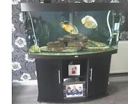 Juwell 4foot bow front fish tank, Inc fish