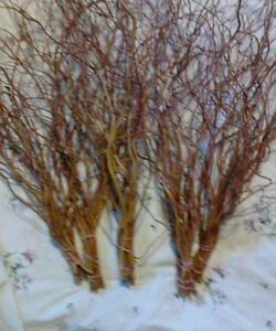 CURLY WILLOW BRANCHES NEW 5 BUNCHES DRIED ,REDDISH BROWN WOOD
