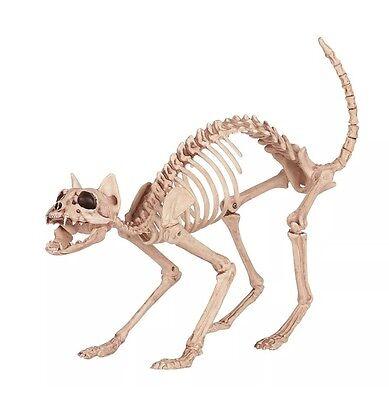 Crazy Bonez Skeleton Cat Natural Halloween Decor Funny Party Prop New Unique