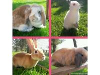 Gorgeous rabbits for sale