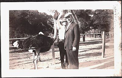 VINTAGE 1925-35 LOS ANGELES SAN DIEGO CALIFORNIA ZOO OSTRICH FARM BIRD OLD PHOTO