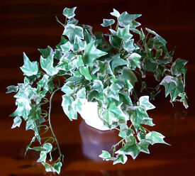 Faux silk variegated ivy plant with white ceramic pot