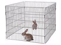 rabbit / guineapig run