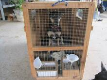 2 large pet crates. Caboolture Caboolture Area Preview