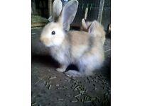 baby rabbits needing homes
