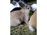 Rabbits in need of homes