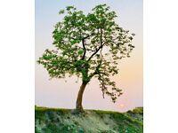 Tree Surgeon / Arborist / Tree Work