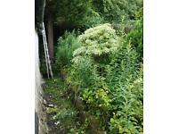 Garden services & ground care.