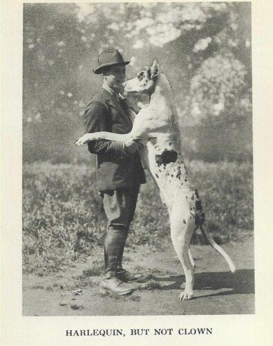 """Harlequin Great Dane """"P"""" - 1931 Vintage Dog Print - MATTED"""