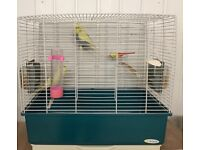 2 baby budgies with cage