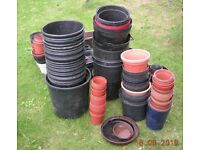 Plastic flower pots and seed trays