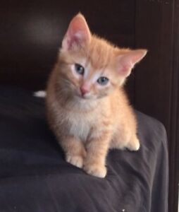 6/7 weeks old kitten is WANTED