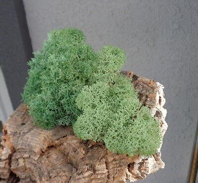 Reindeer Lichen-Moss Green