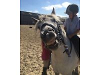 Amazing 11.2 Pony for Full Loan