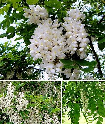 Winterharte Blumen Fur Balkon Test Vergleich Winterharte Blumen