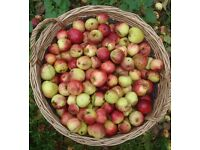 WANTED: Cooking, cider, crab apples wanted