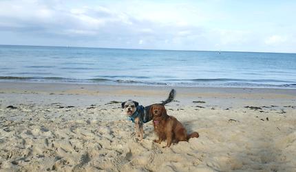 Charlie's Dog Sitting  Service. SMALL Dog holidays....NO DAYCARE
