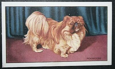 PEKINGESE  Toy Dog   Original 1930's Vintage Card ## VGC