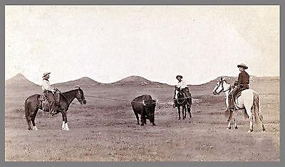 """1887 Photo, Cowboy, Roping, Buffalo, Horse, 20""""x12"""", Western, Ranch, antique"""