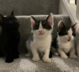 Kittens READY TODAY