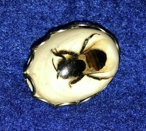 Rare Vintage Real Bee Encased in Lucite Dome Pin Silver Tone Metal