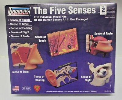 New Lindberg The Five Senses Touch Smell Hearing Sight Touch Educational