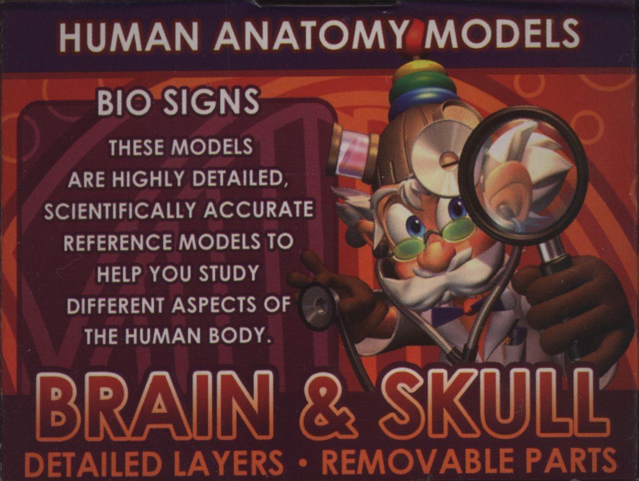 EIN-O SCIENCE BIOSIGNS Brain & Skull (Human Anatomy Model by TedCo ...