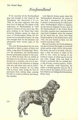 "The Newfoundland - Vintage Dog Art Print - Matted ""G"""
