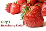Lucy s Strawberry Fields