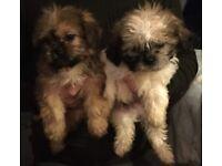 Puppy's 2 boys left
