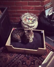 Cat or small dog bed