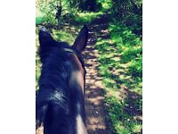Freelance Assisted livery for your horse as well as local dog walking!