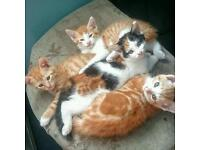 **BEAUTIFUL KITTENS FOR SALE**