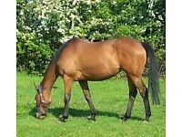 Do you like horse ( Free Riding )