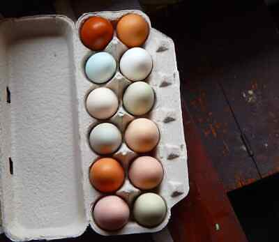 11 Chicken Hatching Eggs Fresh And Fertile Pasture Rasied Mixed Variety