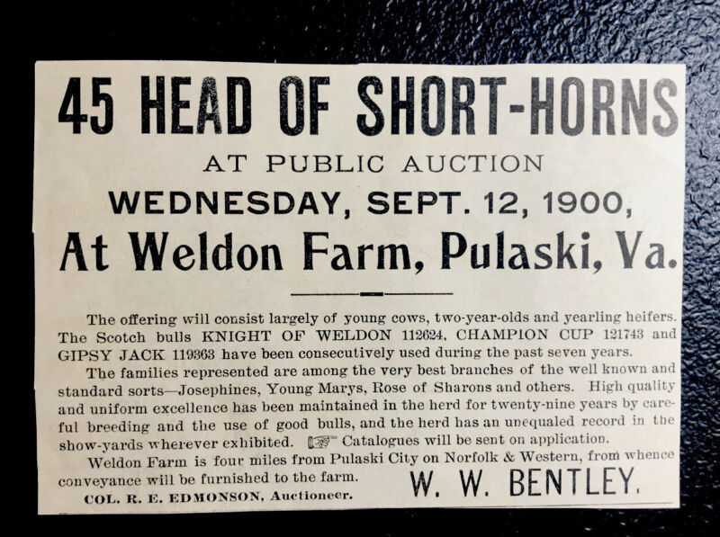 1900 Weldon Farm Cattle Public Sale Advertising - Pulaski - Virginia - Cow
