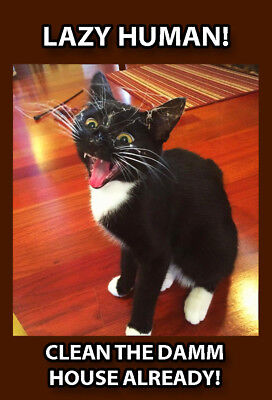 Funny Cat Meme Refrigerator Magnet (2 x 3) Angry Clean Cobweb Dirty House Web